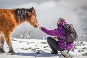 zarko petrovic priroda i divlji konj